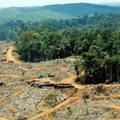 Hutan alam di babat dan di ganti HTI. Foto Heriyadi/Dok KKI Warsi