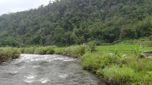 Hutan Adat Rantau Kermas