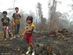 Musim kemarau panjang dan El Nino menyebabkan sebagian hutan Orang R